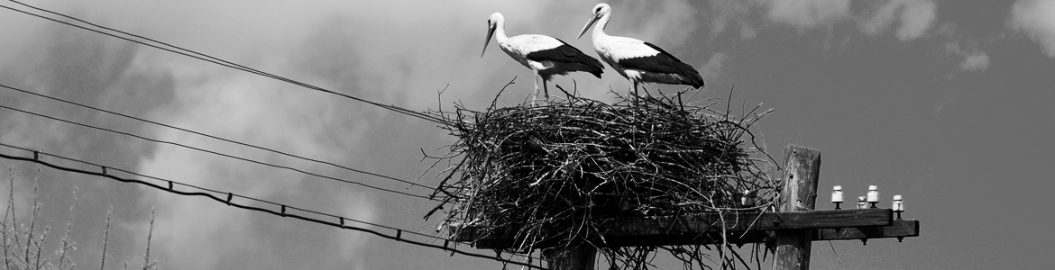 header-Mary-Heather-Noble-birdnest